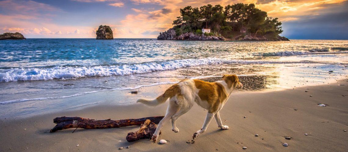 Hund på strand i Grækenland